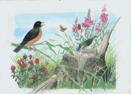 An illustration from The Robin and the Song Sparrow.